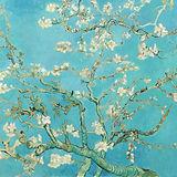 blossom enhanced.jpg