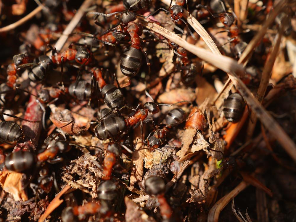 толпа. люди глупее муравьёв.
