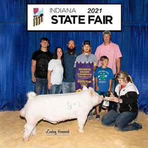 Blaine Collins Indiana State Fair Reserve Grand Champion Yorkshire Boar