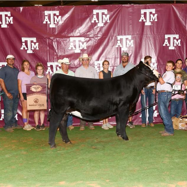 Lane Hagan Texas A & M Saddle & Sirloin Overall Grand Champion Heifer