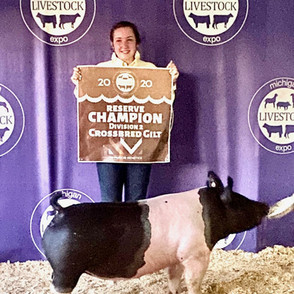 Maeh Palmatier  Michigan Livestock Expo Reserve Division 2 Crossbred Gilt