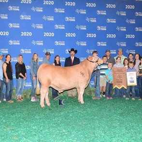 Zane Potter State Fair of Texas Grand Champion Steer