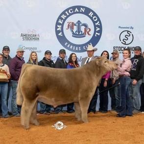 Bell Family  American Roayl  Grand Champion Market Steer