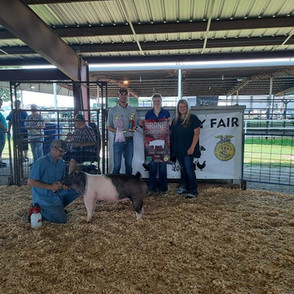 Taryn Earp Craig County Livestock Show Grand Champion Breeding Gilt