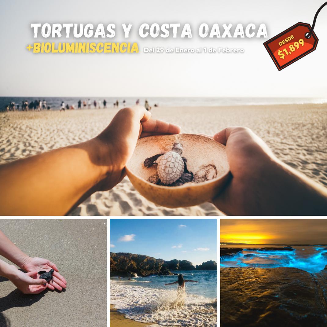 TORTUGAS Y COSTA OAXACA BOST.png