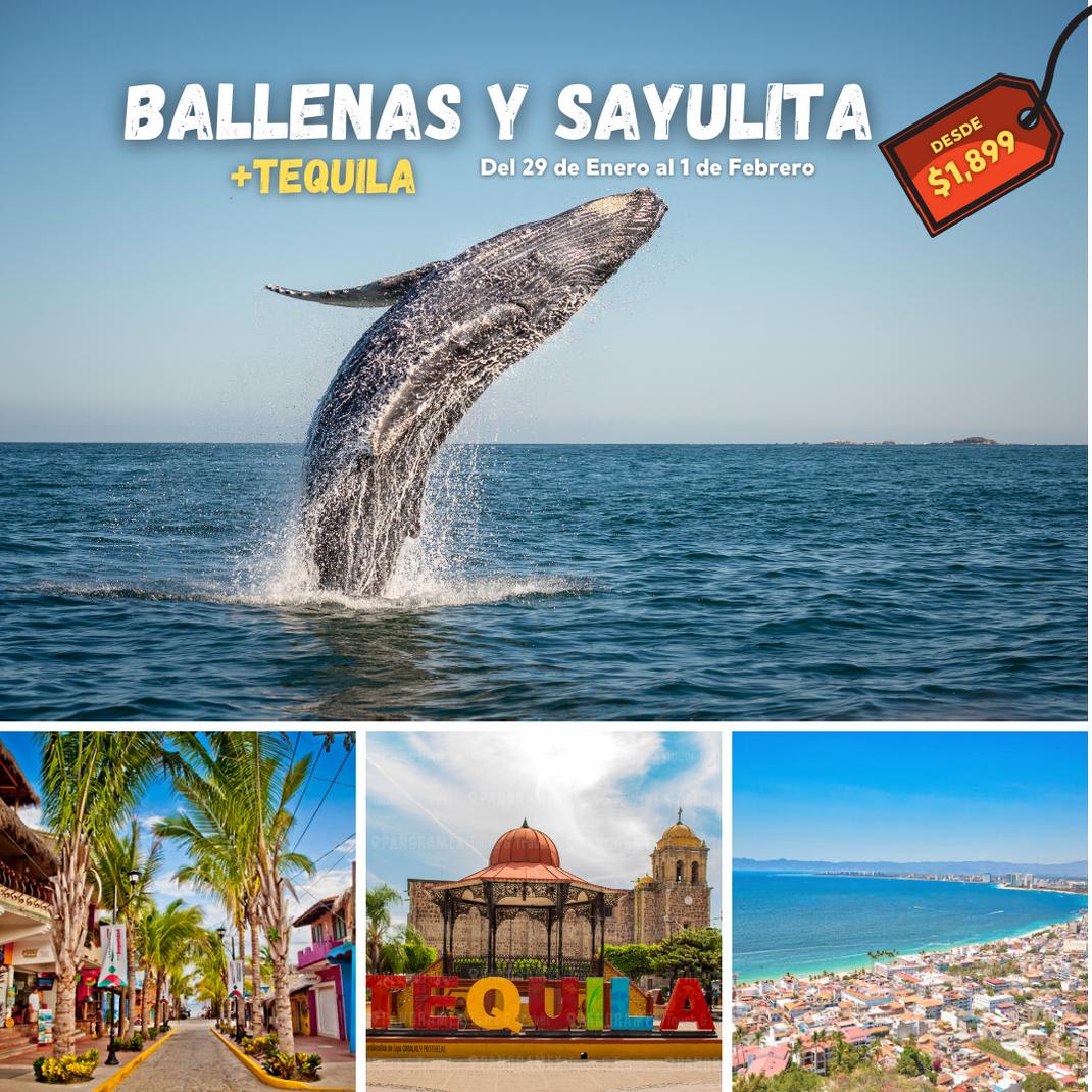 BALLENAS Y SAYULITA BOST.png