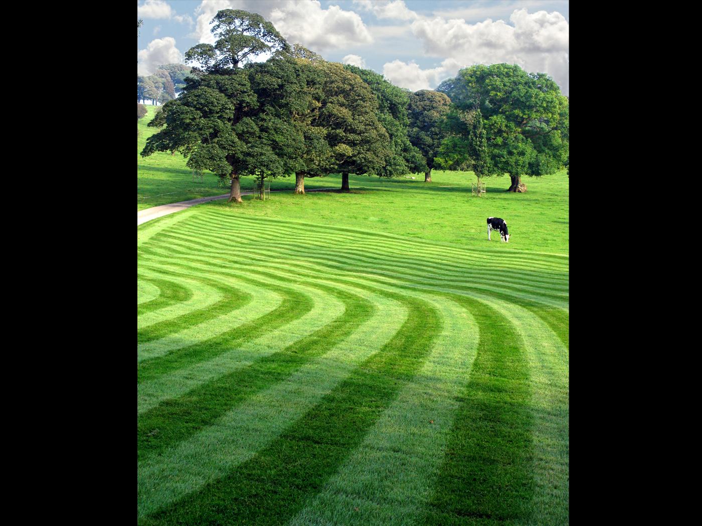 DPI 3rd place - Mown Grass