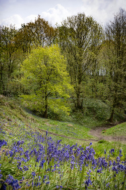 102 - Ancient Woodland - Parbold  By Mark Edwards