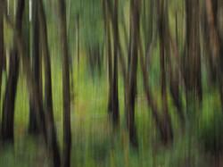 193 - woodland abstract By John Houston