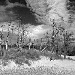 01;Lynette Marsden;Dune Trees