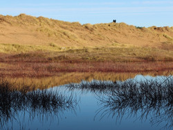 97 - Wetland in the Dunes By Andy Bold