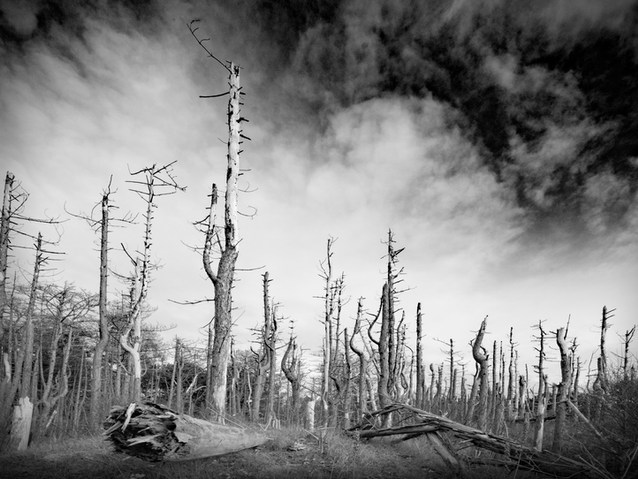 Mono Highly Commended By Mark Edwards;Formby woods 2030