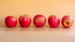 175 - Pink Ladies BY Anita Abdous