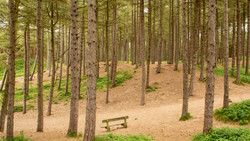 92 - Formby Woods BY Anita Abdous