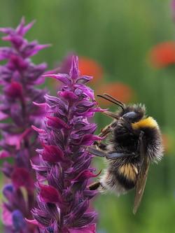 9 - Bumble Bee By John Houston