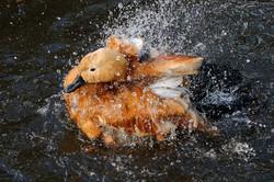 laurence lissett; Going for a splash