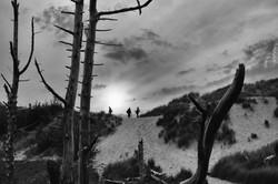 90 - Formby silhouette By Amanda Scott-Norton