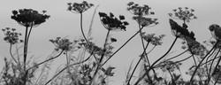 02M;Lynette Marsden;Silhouettes