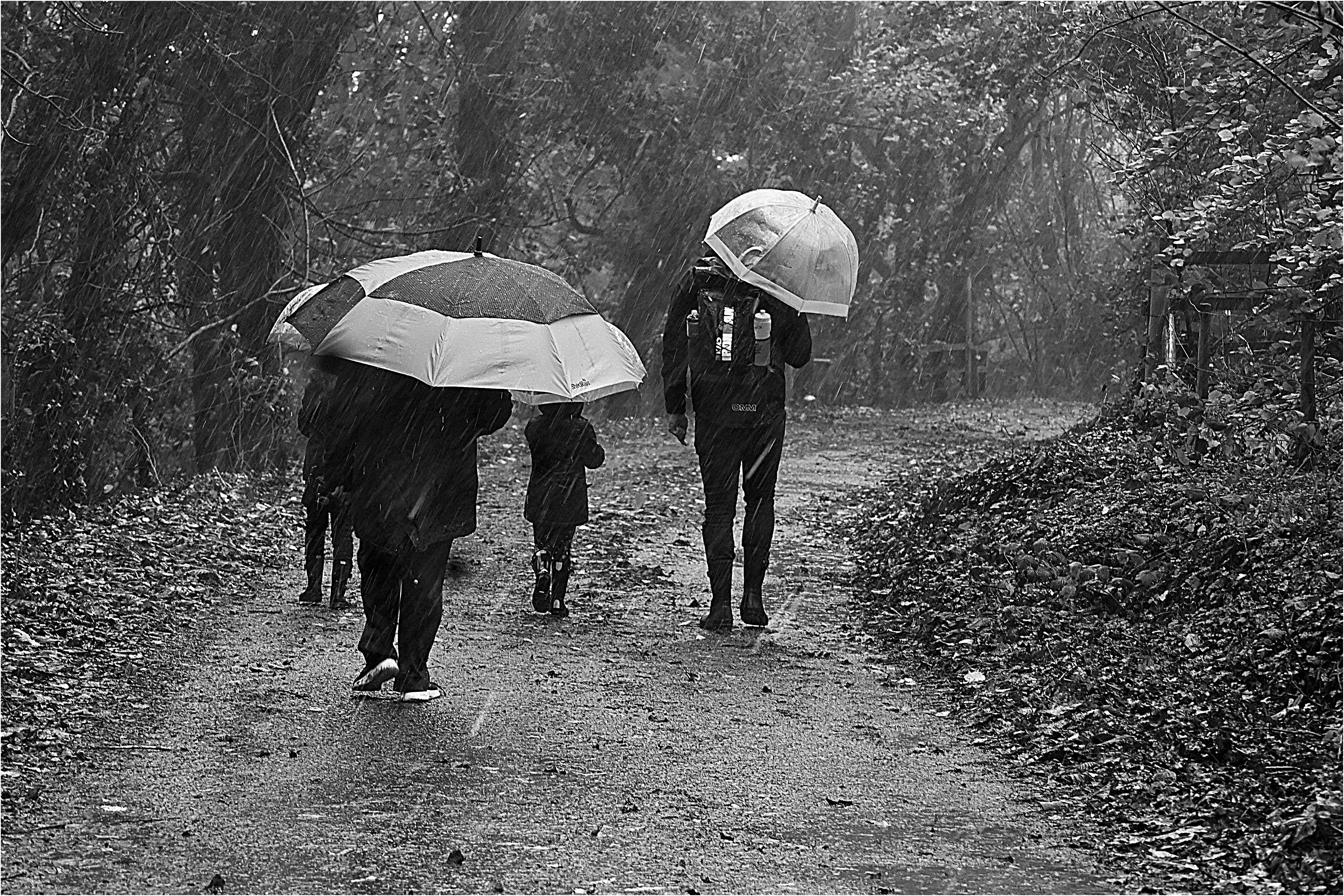 01M;Laurie Lissett;Wet Winter Walk