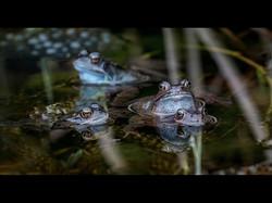 DPI 3rd Frolicking Frogs