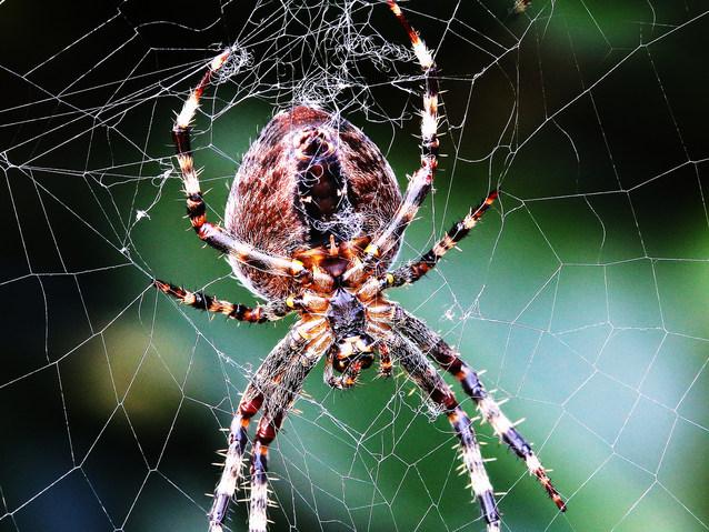 Colour 3rd; John Crooks; Garden Spider Spinnarette
