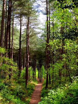02;Glynn Marsden;Woodland path Formby