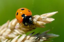 22 - Ladybird By Ian Jones