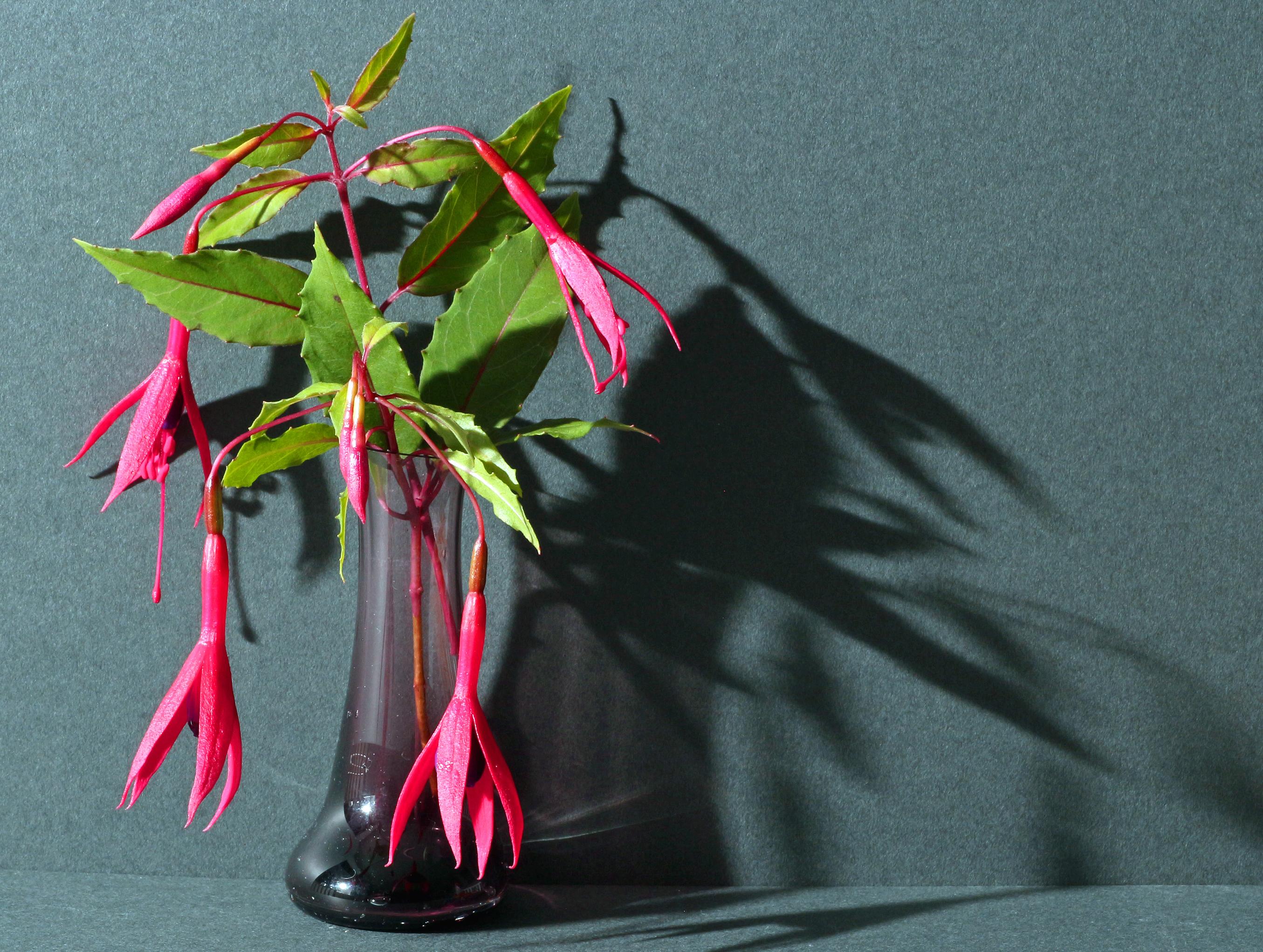 1st Colour - Fuschia By Lynette Marsden