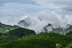109 - Cloud Tea  By Tim Baker