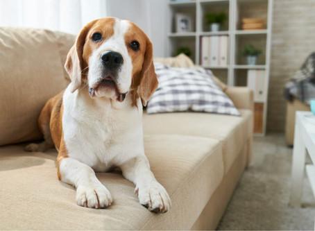Tenencia de animales domésticos en propiedades horizontales, deberes según el Código de Policía