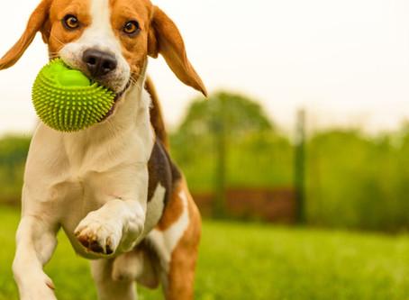 """Ley 2054 """"No podrá prohibirse el tránsito y permanencia de animales domésticos en zonas comunes PH"""""""