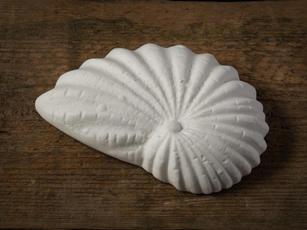 Porcelain Shell