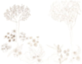 sketch_wix.jpg