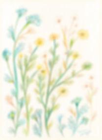 wildflowers_k_wix.jpg