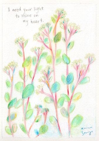 wildflowers_p_wix.jpg