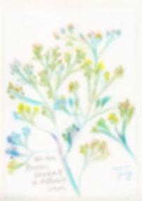 wildflowers_m_wix.jpg