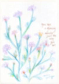 wildflowers_r_wix.jpg
