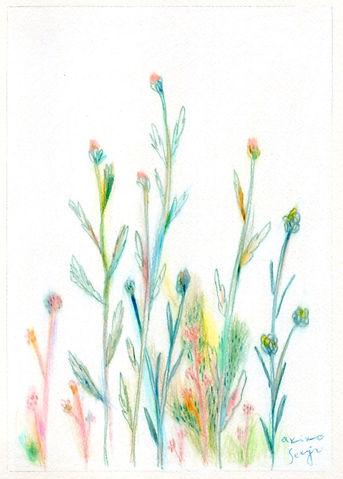 wildflowers_q.jpg