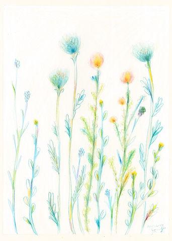 wildflowers_l_wix.jpg