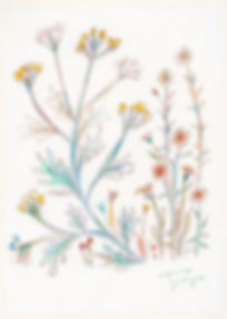 wildflowers_h_wixのコピー.jpg