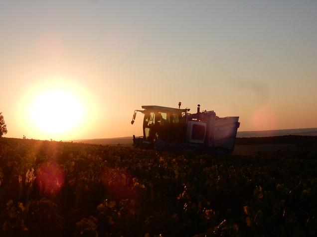 Domaine de Vauroux, Vins, Chablis, Olivier Tricon, 6.jpg