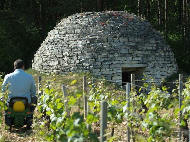 Domaine de Vauroux, Vins, Chablis, Olivier Tricon, 18.jpg