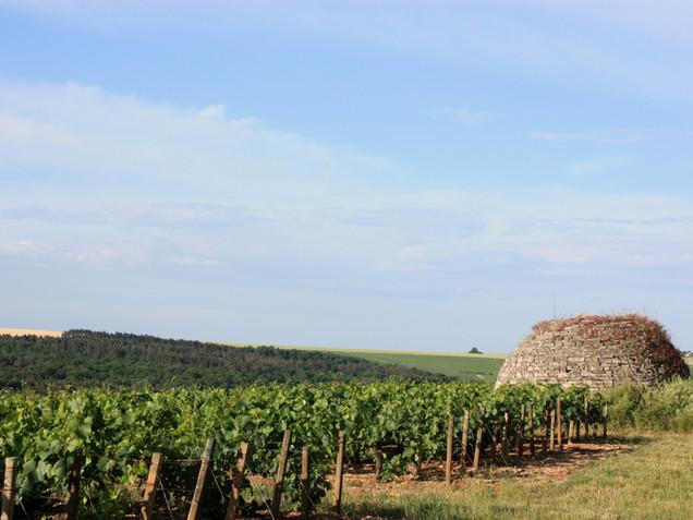 Domaine de Vauroux, Vins, Chablis, Olivier Tricon, 12.jpg