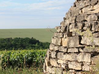 Domaine de Vauroux, Vins, Chablis, Olivier Tricon, 5.jpg