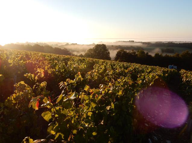 Domaine de Vauroux, Vins, Chablis, Olivier Tricon, 7.jpg