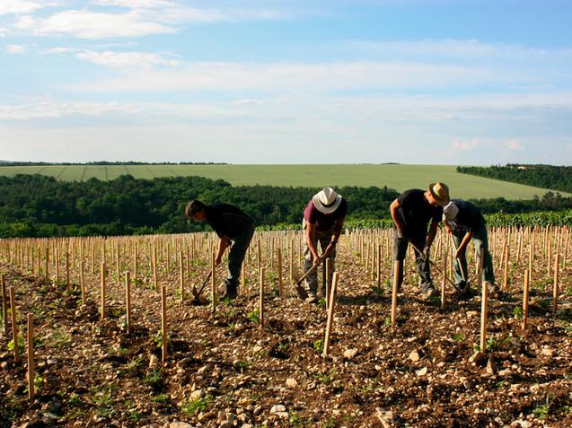 Domaine de Vauroux, Vins, Chablis, Olivier Tricon, 14.jpg