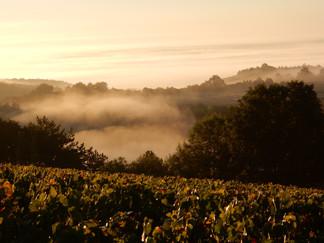 Domaine de Vauroux, Vins, Chablis, Olivier Tricon, 2.jpg