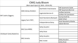 Pedigree Judy
