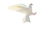 dove-2755928_1920.png
