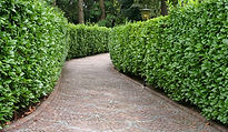 leaf collection basingstoke, leaf collection hampshire, leaf collection berkshire, hedge cutting basingstoke, hedge cutting hampshire, hedge cutting berkshire, garden basingstoke, garden hampshire, garden berkshire, gardening basingstoke, gardening